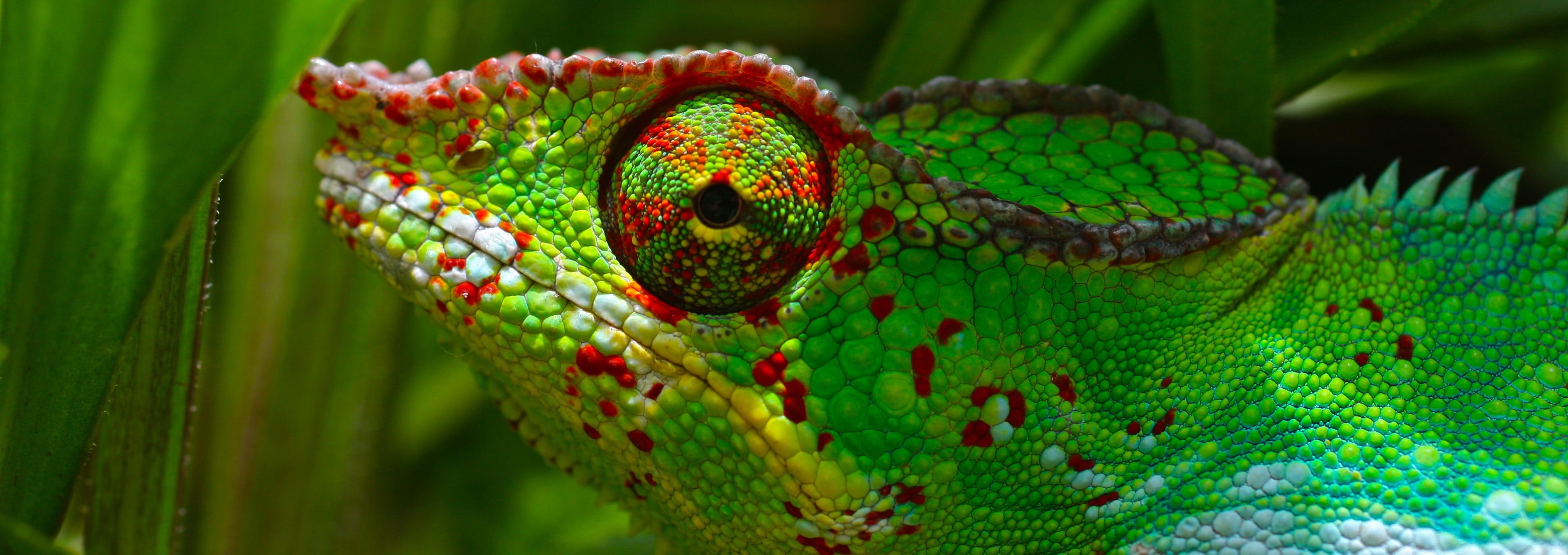 clients culture chameleon
